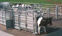Ritche Cattle crusher